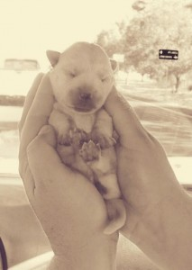 infantpup